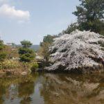 Nara ogrody Japonia