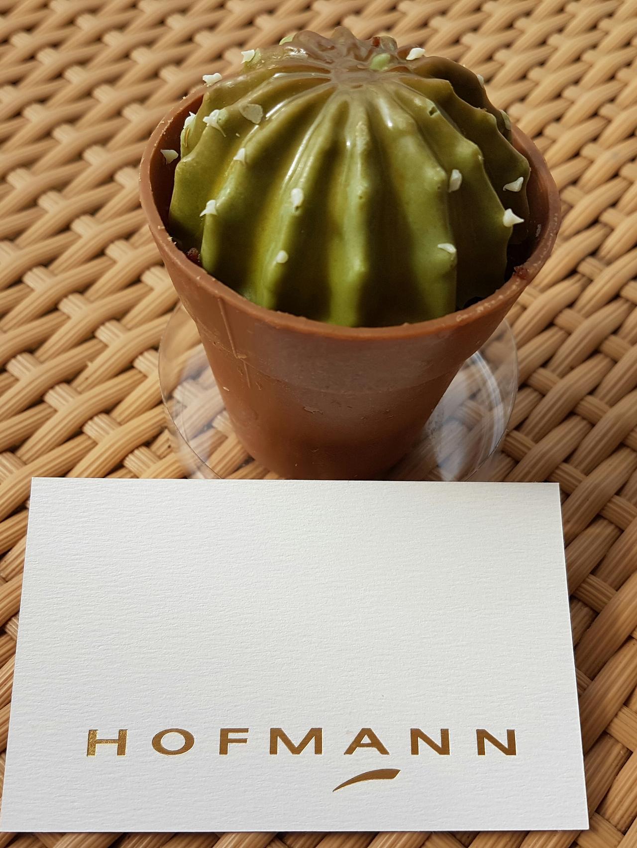 hofmann kaktus