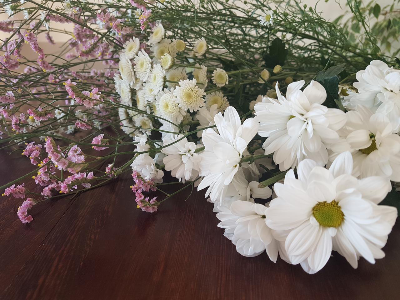 swieze kwiaty maregerytki