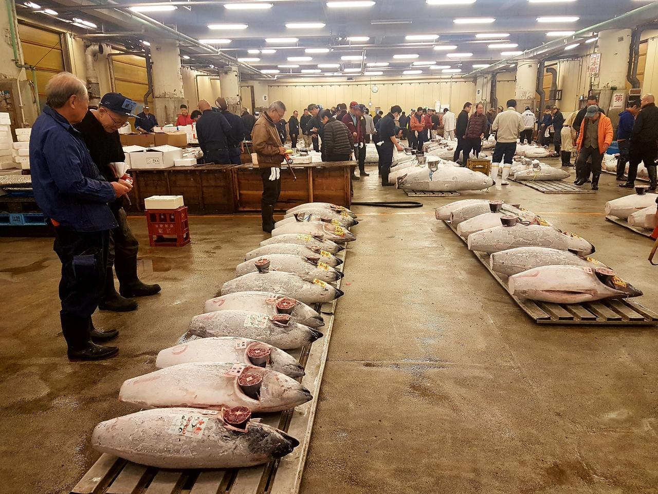 licytacja tunczyka Tsukiji Market