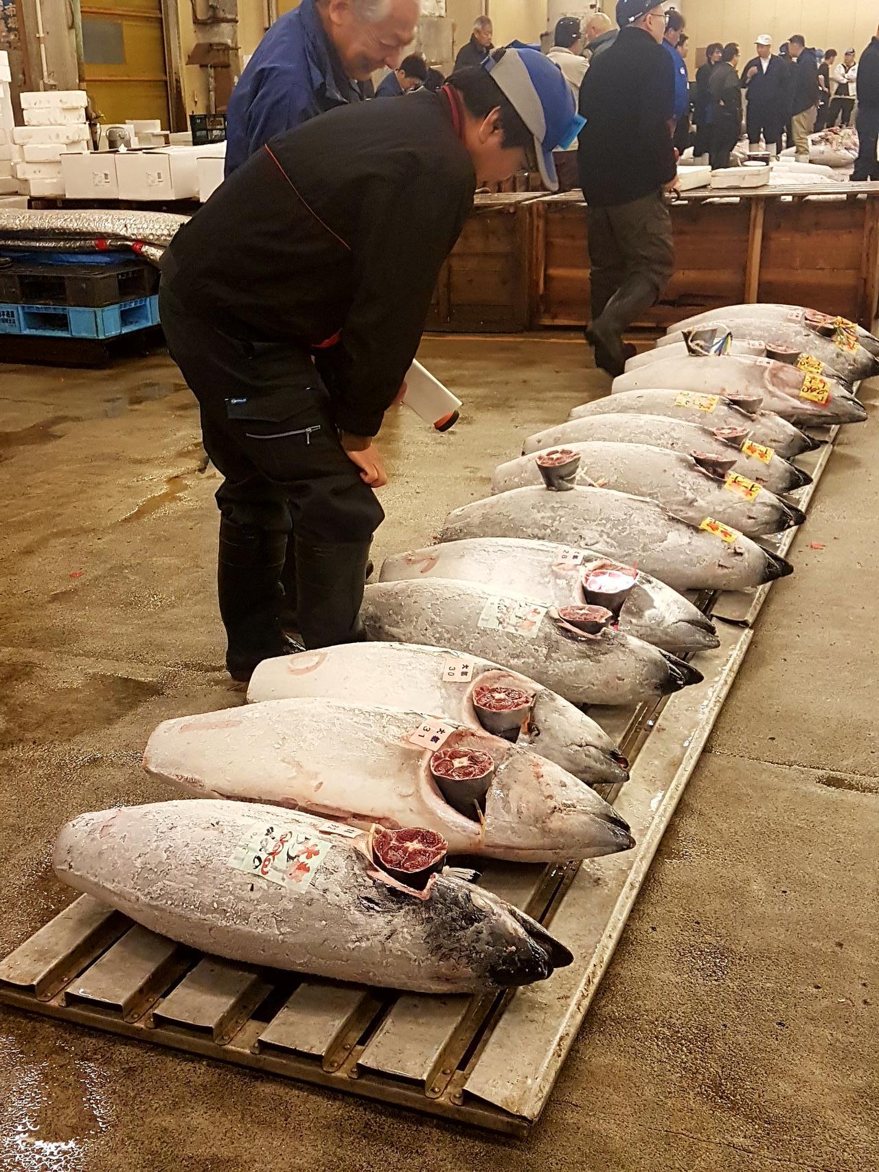 licytacja tunczyka Tuskiji Market