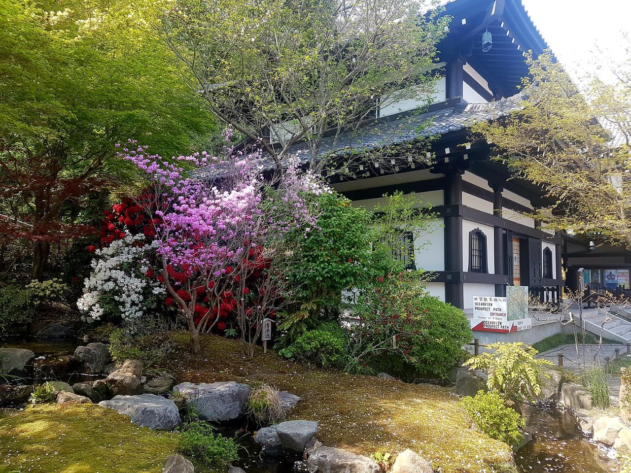 Kamakura Japonia wisnie