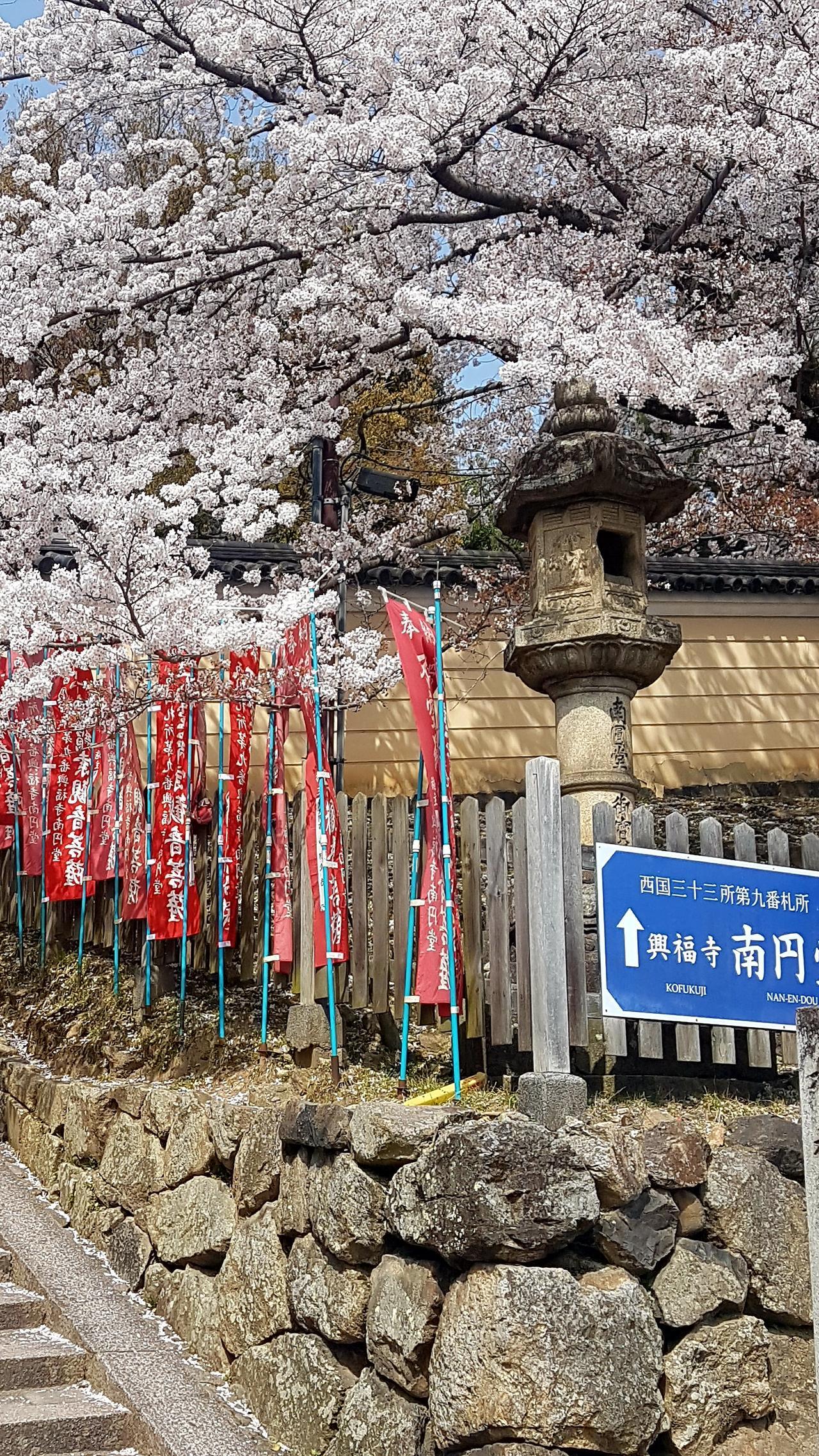 wisnie Nara Japonia