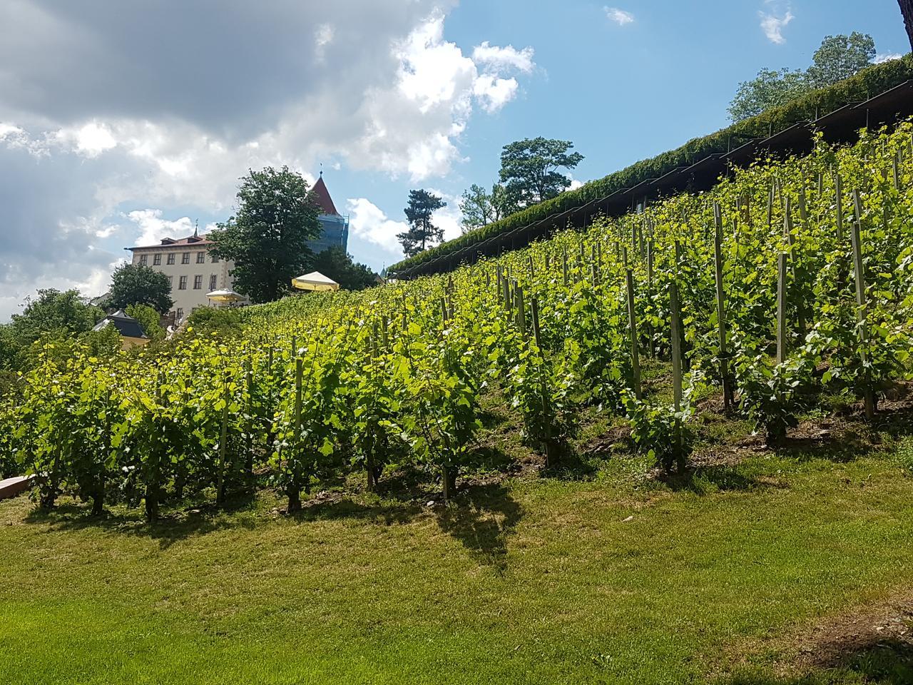 winnice praga czeska